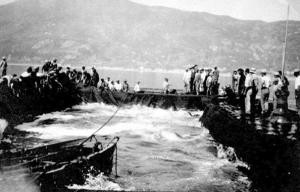mattanza, tonnara di San Giorgio, (coll. Giardina)