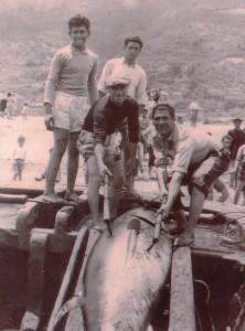 Tonno arpionato a riva, Tonnara di S. Giorgio (coll. Giardina)