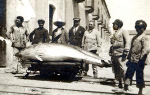 Tonni trasportati su carrelli nei magazzini di lavorazione, tonnara di S. giorgio (coll. Giardina)