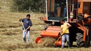 Altopiano-di-Rascino-Riccardo-e-la-raccolta-delle-lenticchie-agosto-2016-foto-Broccolini