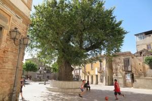 San Lorenzo, La piazza dell'olmo, giugno 2016 (ph. V. Teti)
