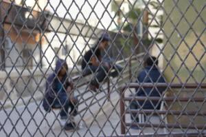 didascalia-giovani-migranti-seduti-dietro-la-rete-di-recinzione-delle-scuole-verdi-di-augusta-da-palermo-repubblica2