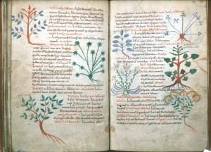 Erbario-miniato-dello-pseudo-Apuleio-salvia-e-altre-erbe-XI-sec.