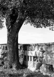 Locri Epizephiri, Magna Grecia, 1993 (ph. Salvatore Piermarini).