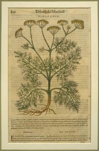 -Ricettario-botanico-finocchio-Discorsi-di-P.-Matthioli-nel-III-lib.-di-Dioscoride.