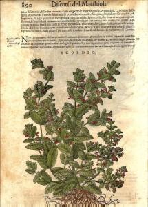Ricettario botanico, scordio, Discorsi di P. Matthioli nel III lib. di Dioscoride.