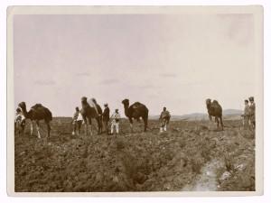 3-aratura-con-cammelli