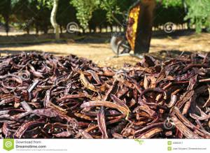 http://www.dreamstime.com/stock-image-ripe-carobs-harvesting-pile-image43882611