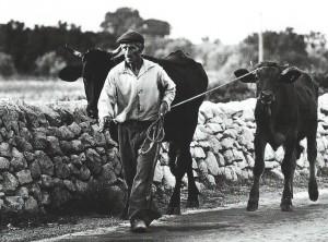 ph.-Giuseppe-Leone.