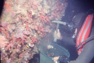 Il-corallo-di-Benzù-ph.-A.-Farassino