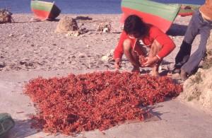 Miraldo e il corallo ad asciugare, 1978 (ph. Farassino)