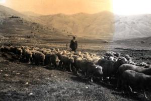 Gregge-in-transumanza-autunnale-nella-prima-metà-del-secolo-XX.-Archivio-S.-Adriani