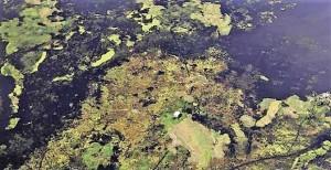 Immagine-fotografata-da-satellite.
