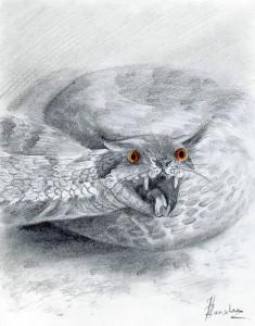 figura7-regolu-disegno-originale-di-igli-ranxha
