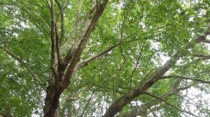 1-alberi-ph-s-pierantoni