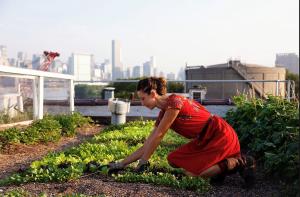 6-coltivare-sul-tetto