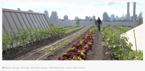 9-_brooklyn-farm-on-the-top_