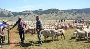 2-in-attesa-delle-valutazioni-zootecniche-dialoghi-tra-pastori