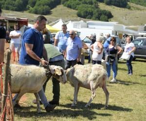 3-ogni-pastore-mostra-i-capi-migliori