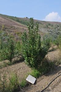 foto3-coltivazione-frutta-antica