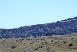 greggi-e-pastori-fuori-dai-giorni-di-festa