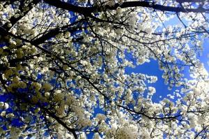 fioriture-a-nyc-foto-di-f-schiavo