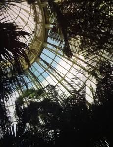 serre-al-giardino-botanico-del-bronx-foto-di-f-schiavo