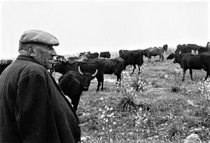 floresta-il-lavoro-dei-pastori-1
