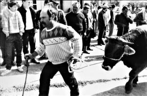il-lavoro-dei-pastori-in-sicilia-foto-nino-privitera