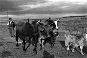 pastori-del-messinese-2-foto-nino-privitera