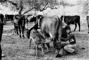 pastori-di-tortorici-la-muncitura-foto-nino-privitera
