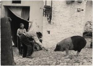 porco_santantonio_grottole_1952