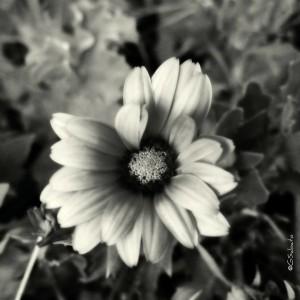 3-g_sabato-palermo-fiore