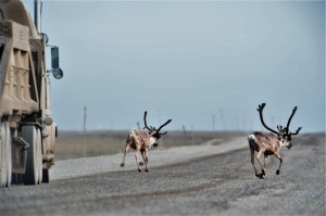 5-mining-activities-impact-on-caribou-routes