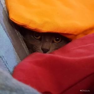 8-g_sabato-gatto-occhi