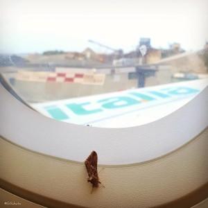g_sabato-aereo-farfalla