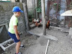 5-alessio-governa-le-galline-di-nonno-angelo-foto-b-adriani