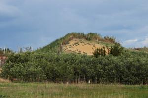 canne-e-olivi-contro-una-duna
