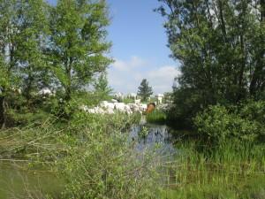 foto-2-femmina-morta-campobasso-sosta-della-mandria-presso-il-laghetto