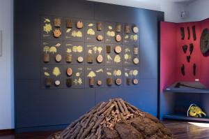 fussuni-e-pannello-essenze-nel-museo-cocchiara