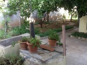 10-tirana-giardino-casa-prifti