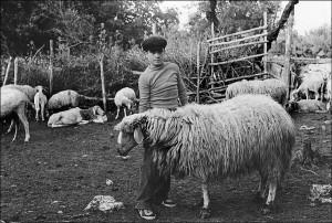 02-giovane-pastore-nellovile-foto-nino-privitera