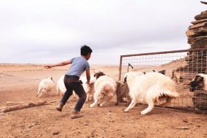 dscf7606_da-qualche-parte-in-mongolia