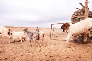 dscf7609_da-qualche-parte-in-mongolia