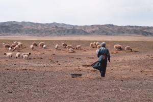 dscf8154_da-qualche-parte-in-mongolia