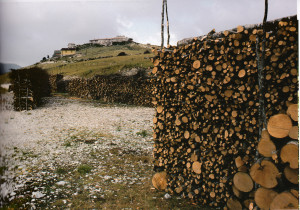 lollini-cataste-legna