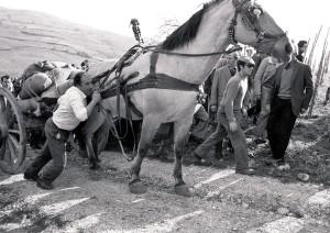 partinico-loc-grisi-1975-gara-di-traino-ph-gaetano-pagano